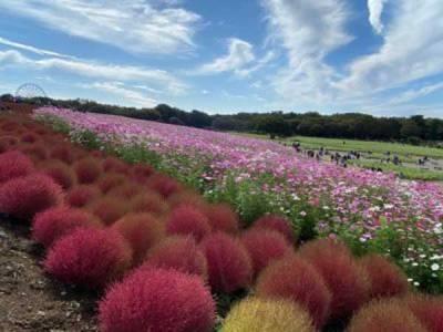 Ibaraki Travel Guide