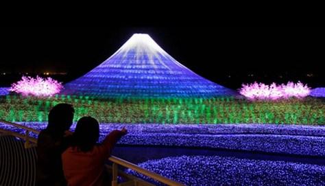 fuji blossoms light
