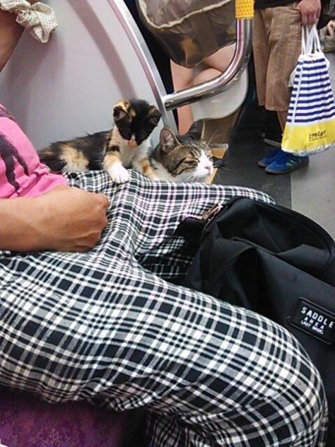 cat train3