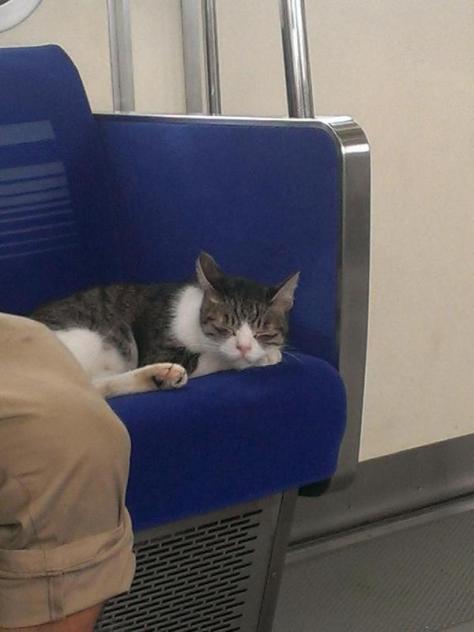 cat train6