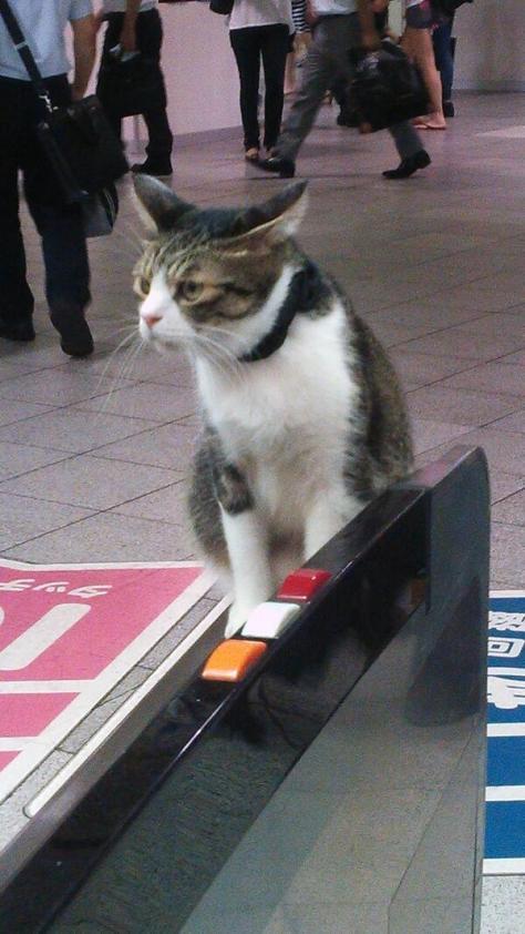 cat train7