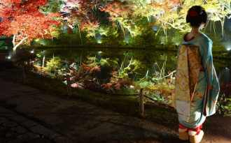 Flammande höstlöv i Japan