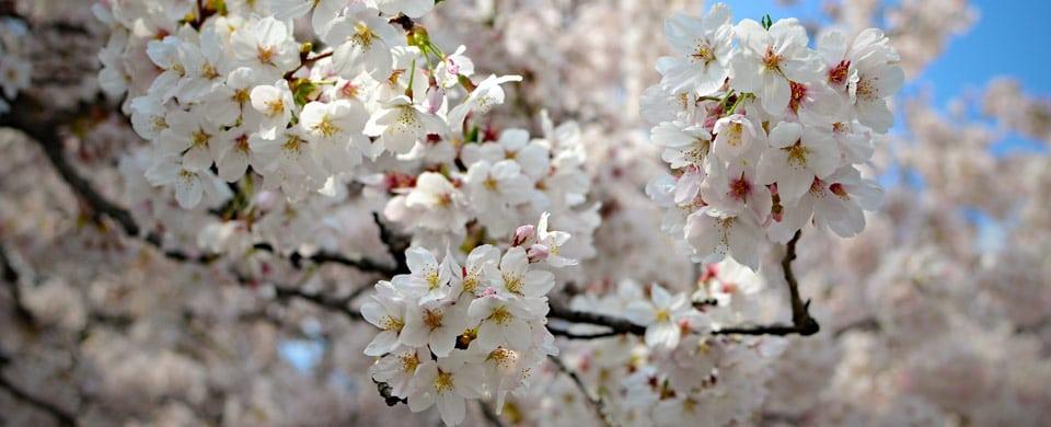 Japansk väder- och årstidsguide