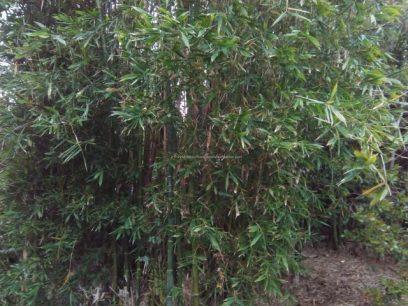 Medlands Beach Backpackers & Villasの庭の竹