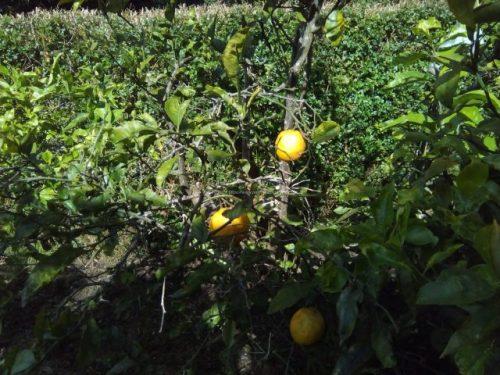 Medlands Beach Backpackers & Villasのオレンジ