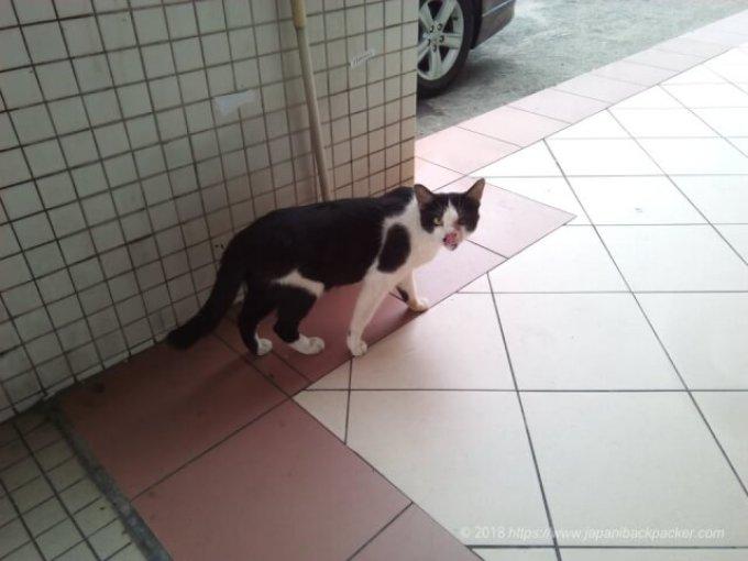 ブルネイの猫