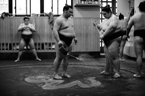 ALF_8538_sumo-small