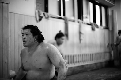 ALF_8544_sumo-small