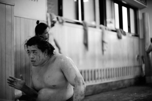 ALF_8545_sumo-small