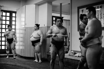 ALF_8547_sumo-small