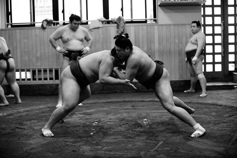 ALF_8556_sumo-small