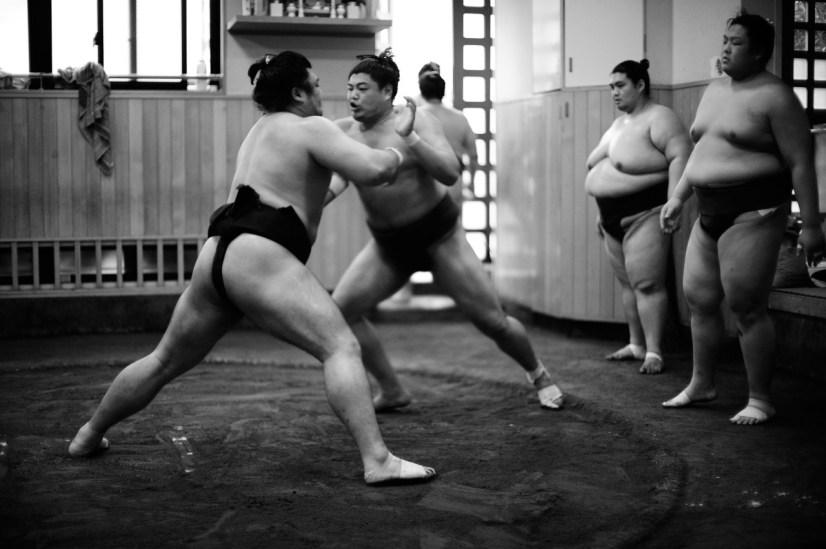 ALF_8567_sumo-small