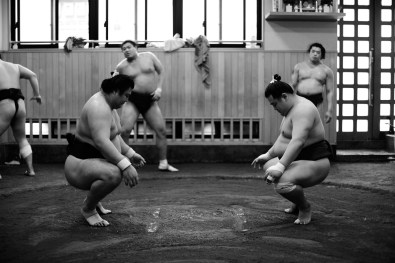 ALF_8584_sumo-small