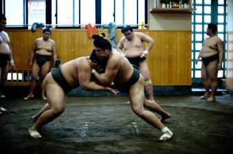 ALF_8647_sumo-small