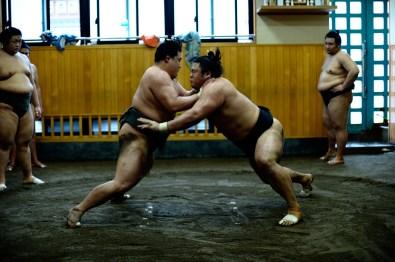 ALF_8670_sumo-small