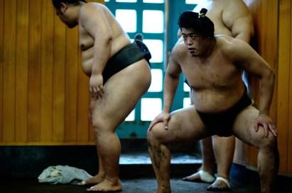 ALF_8698_sumo-small