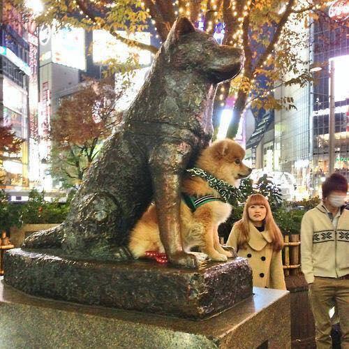 Hachiko em Shibuya