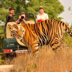 wildlife tours uttarakhand