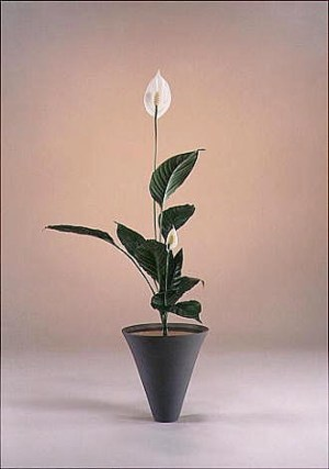 Estetyczno filizoficzne aspekty sztuki układania kwiatów w