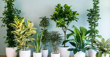 افضل 6 انواع نباتات منزلية لا تحتاج للشمس