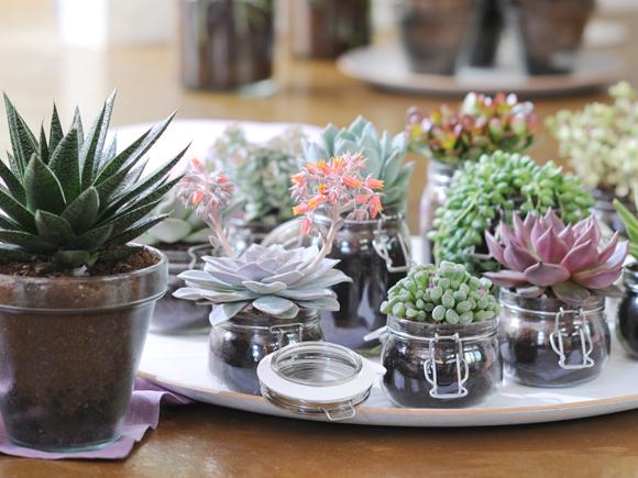 Como cuidar das plantas de interior no ver o jardiland - Plantas de interior altas ...