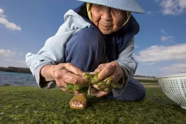seaweed-japan_41551_600x450