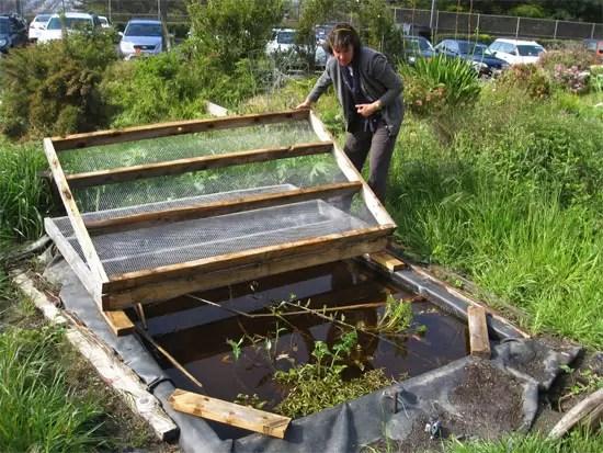 Aprenda a usar a natureza como aliada para diminuir a for Small frog pond ideas