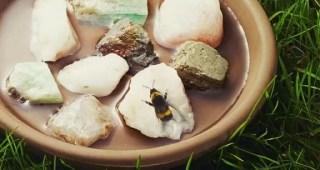 banho de abelha