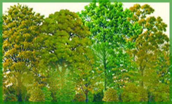 kit haie brise vent n 2 36 plants pour realiser 35 metres de plantation lineaire racines nues