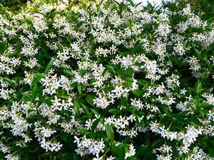 No conjunto: Uma profusão de flores.Foto de Herry Lawford