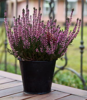 les fleurs arbustes et plantes d hiver