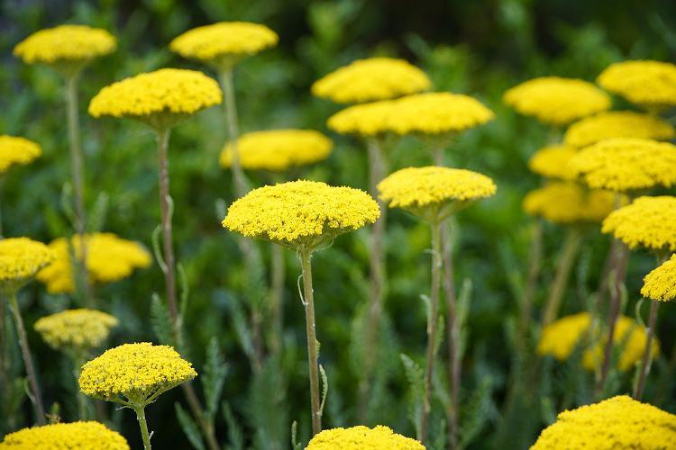 9 plantes qui aiment le soleil