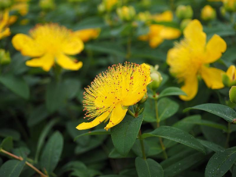 10 plantes resistantes au vent pour le
