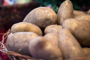 Récolte de pommes de terre