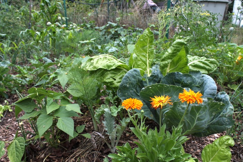 butte permaculture que faire au jardin potager en juillet