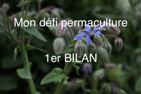 défi permaculture bilan conseils