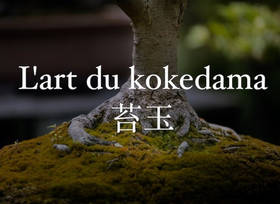 l'art du kokedama japon bonsai