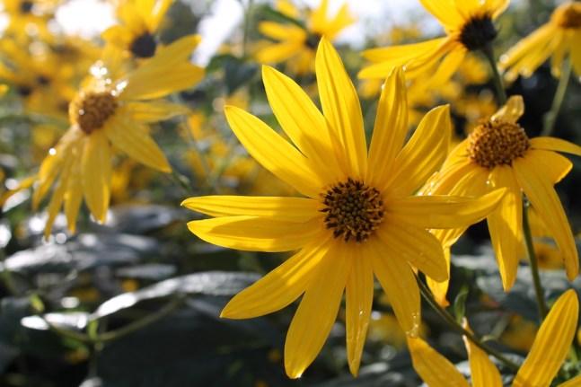 Que faire au jardin potager en octobre – Jardiner Futé