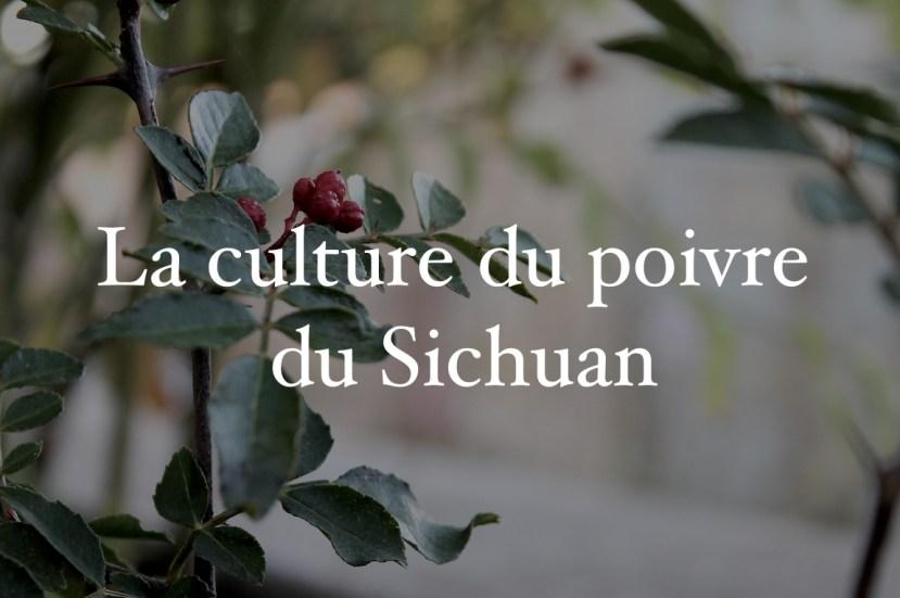 La culture du poivre du Sichuan