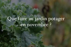 jardin potager novembre