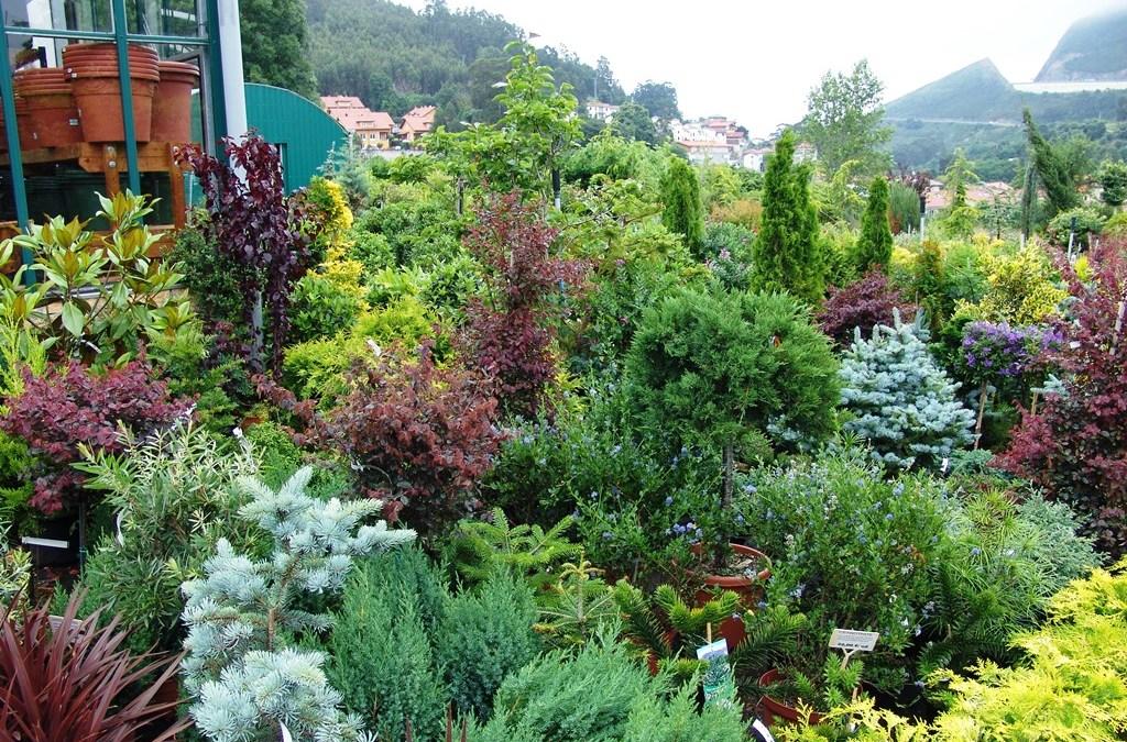 Arbustos de nuestro Garden