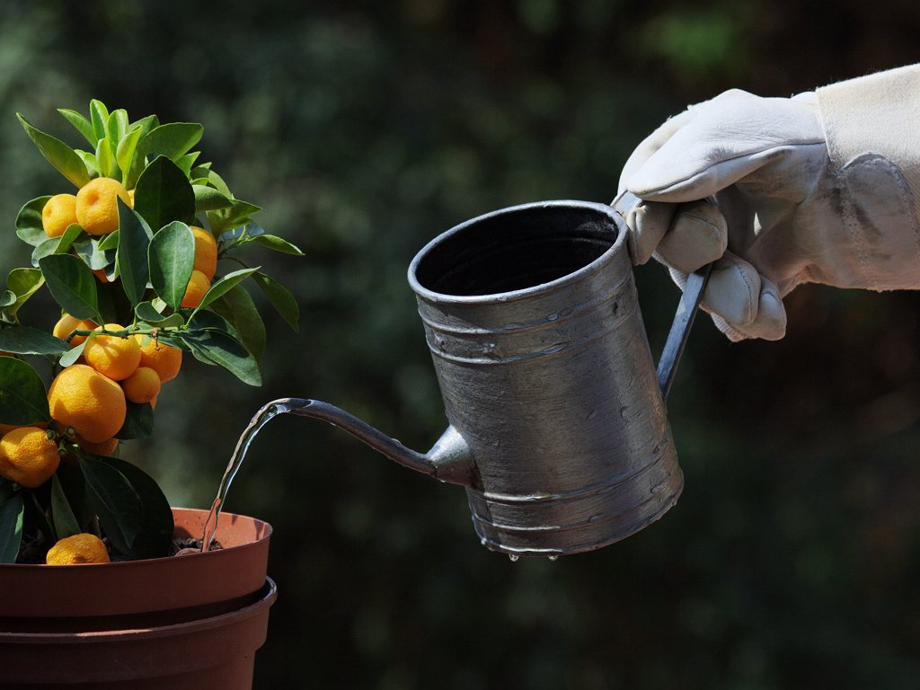Learn how to water your plants well
