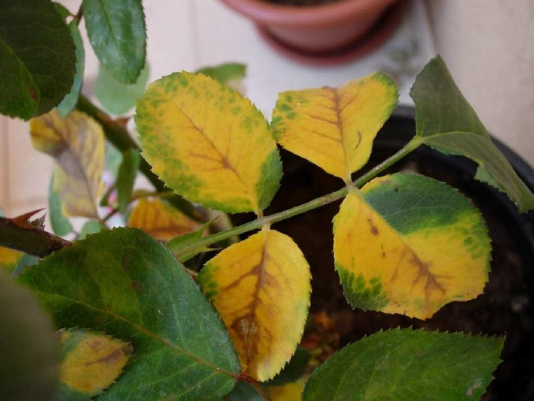 leaves in bad condition