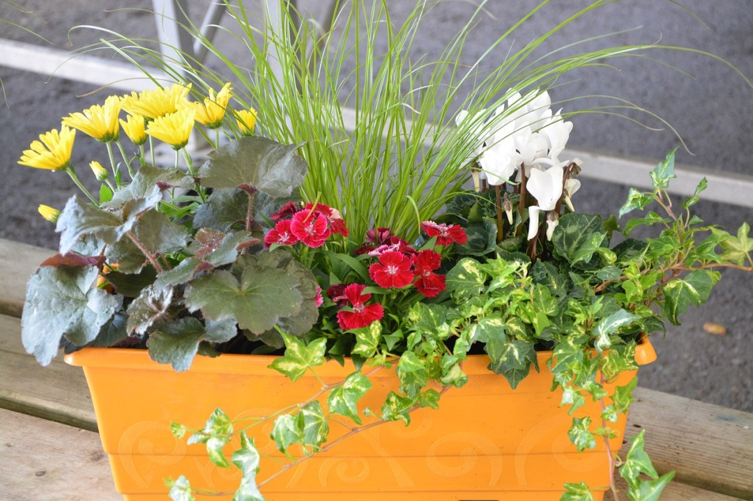 Combine several plants in one pot