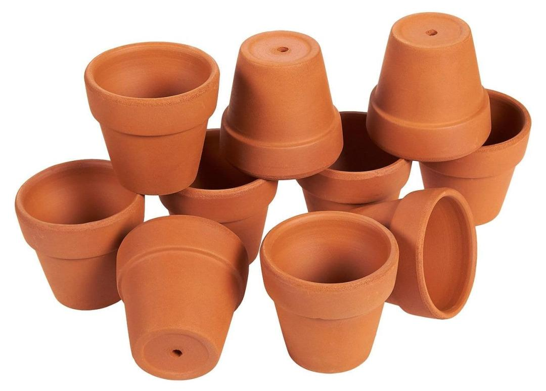 Sow the seeds in small pots