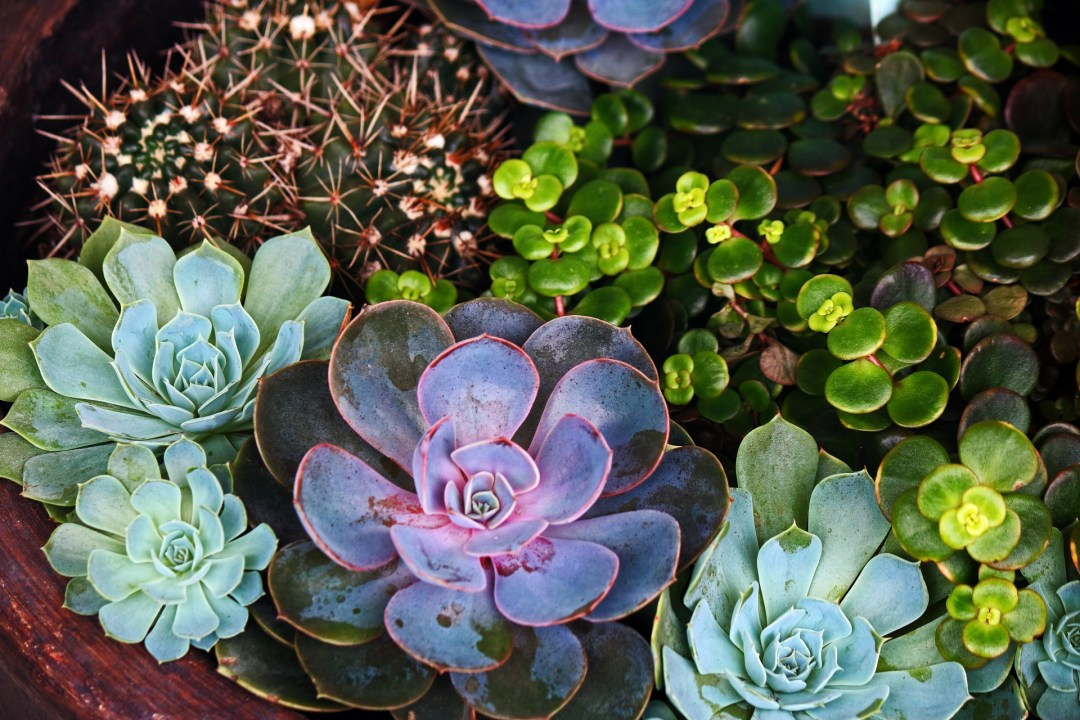 Succulent plants are well suited to compositions