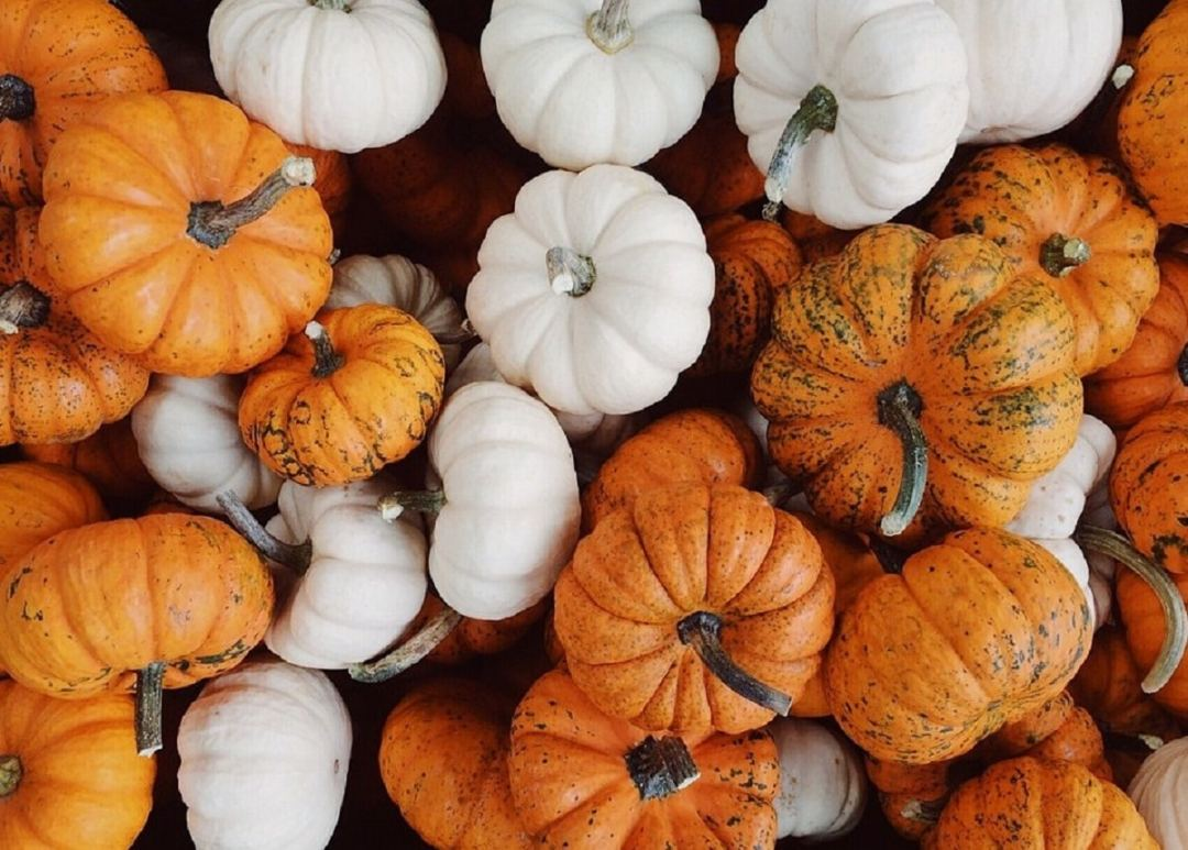 varieties of pumpkins and of different sizes