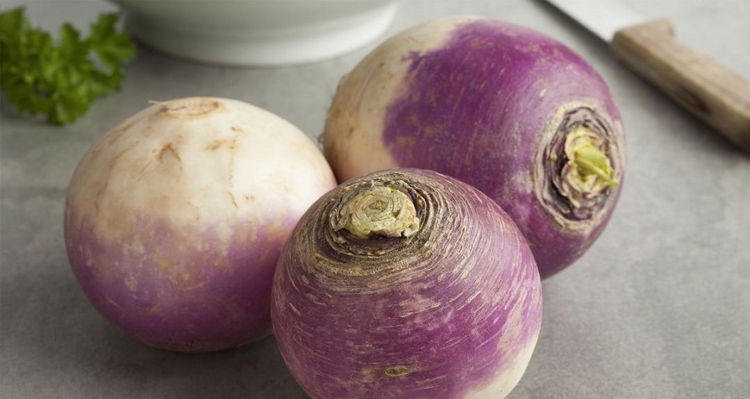 three species of turnips on a table