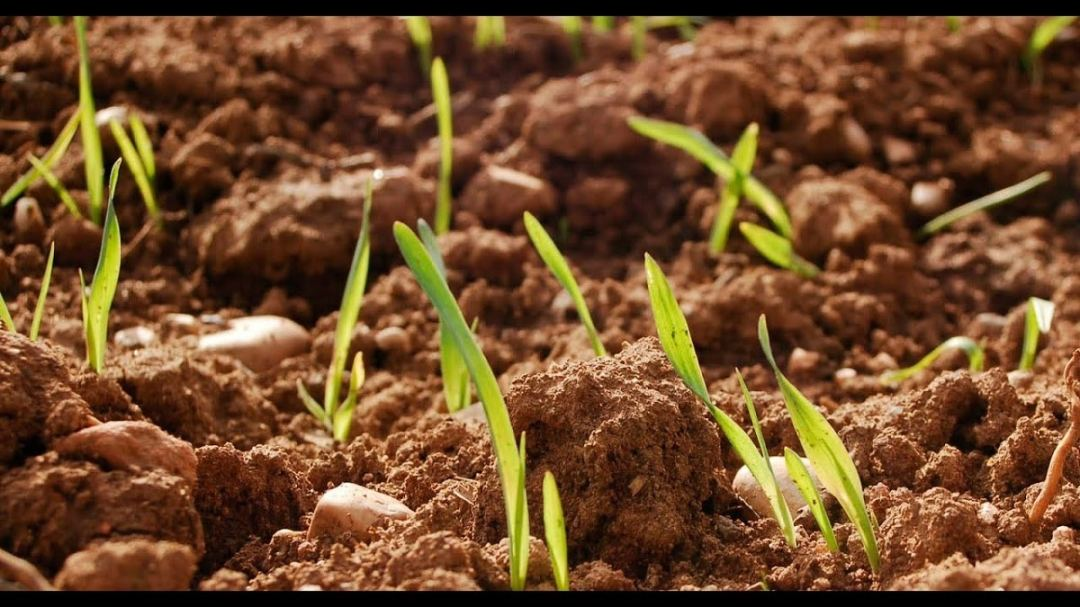 how to recover an eroded soil