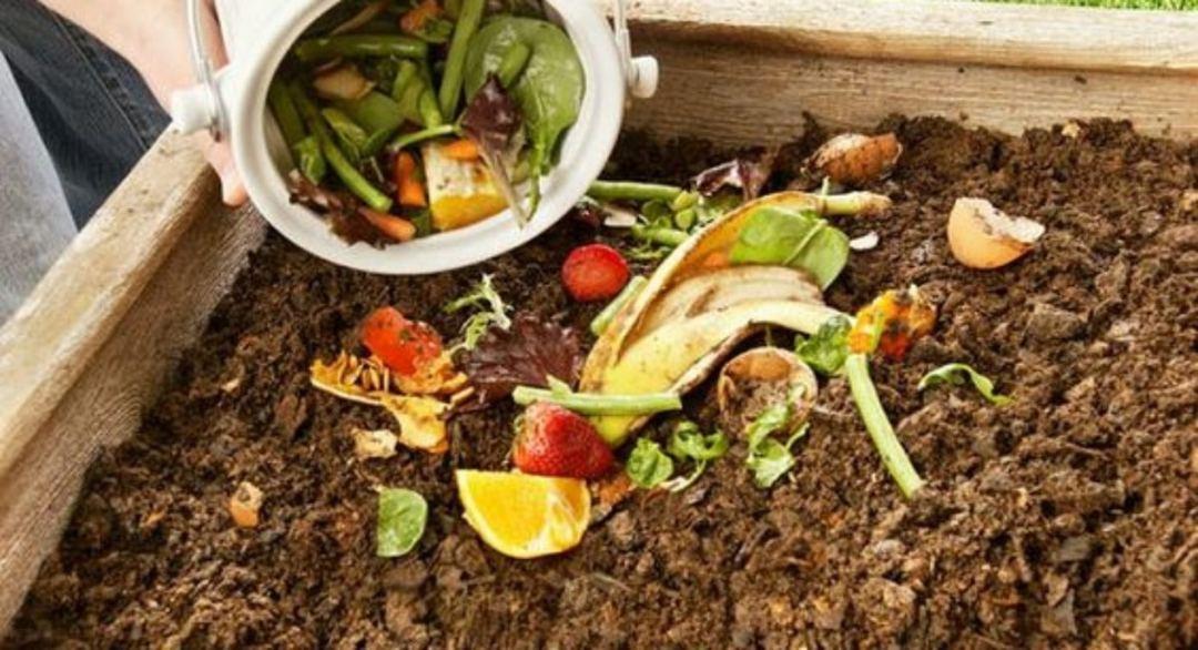 compost ingredients